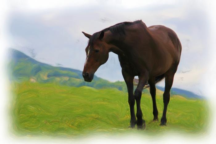 Drive_horse